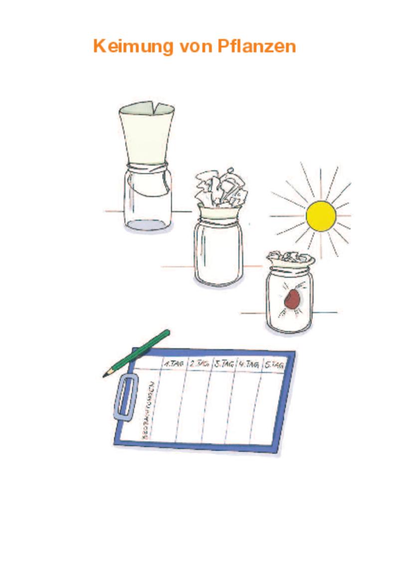 """Chemie.BW """"Experimente für den Küchentisch"""" – Keimung von Pflanzen"""