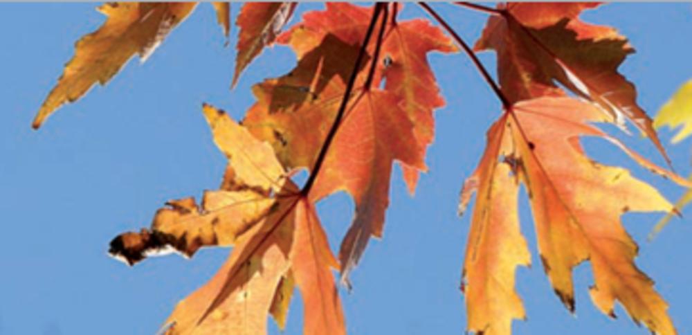 Chemie Verbande Baden Wurttemberg Warum Eigentlich Werden Im Herbst